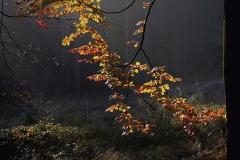 Q3_2020_10_Herbstlicht