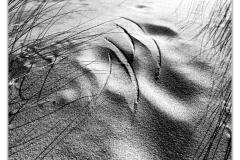 Q3_19_01-Seegras