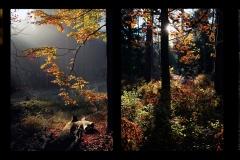 Q4_20_01-Herbstlicht