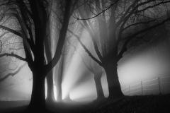 SW2019_158_weisse-nebel-wallen